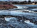 Madison River near Ennis January 2015 18.JPG