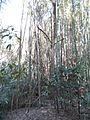 Magnolia Plantation and Gardens - Charleston, South Carolina (8556569580).jpg