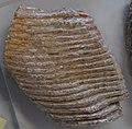 Mammuthus primigenius 40837.jpg