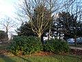 Manor Park, Sutton, Surrey, Greater London 3.JPG