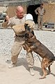 Marines work with their K-9 partners (4503120320).jpg