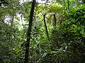 Marojejy National Park, Madagascar (4027553642).jpg