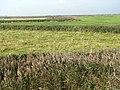 Marsh pastures at Blakeney Eye - geograph.org.uk - 980726.jpg