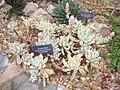 Matthaei Botanical Gardens - IMG 8973.JPG