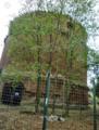 Mausoleo Villa Gordiani 28.PNG
