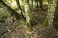 Mežs - panoramio (7).jpg