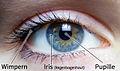 Menschliches Auge, wichtige Teile beschriftet.jpg