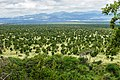 Meru National Park, Kenya - 31624292046.jpg