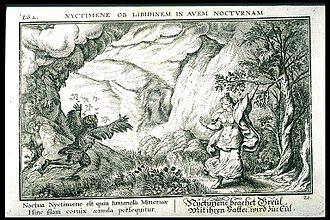 Nyctimene (mythology) - Minerva transforms Nyctimene into an owl.