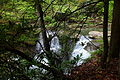Mill-creek-waterfall-forest - West Virginia - ForestWander.jpg