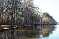 Mill Pond Caddo Lake.jpg