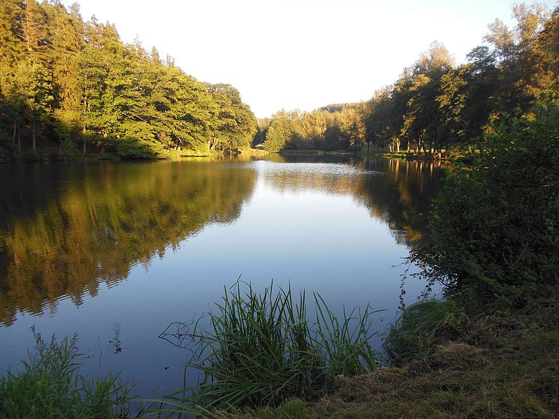 Pond of the Saint-Louis-lès-Bitche Watermill