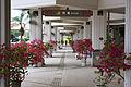 Miyako Airport Okinawa Japan24s3s4592.jpg