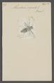 Monedula - Print - Iconographia Zoologica - Special Collections University of Amsterdam - UBAINV0274 043 09 0009.tif