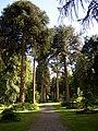 Monkey Puzzle Drive, Woodstock, Inistioge, Co. Kilkenny - geograph.org.uk - 205302.jpg