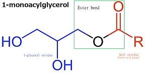 Monoglyceride - Molecular structure of 1-monoacylglycerol