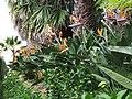 Monte Palace Tropical Garden DSCF0166 (4642529341).jpg