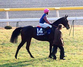 Montjeu Irish-bred Thoroughbred racehorse