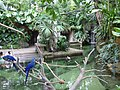 Moody Gardens, Galveston Island texas (9710801214).jpg