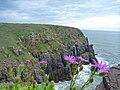 Morgan Bay cliffs - panoramio.jpg
