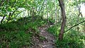 Mote Hill mound and path, Cumnock, East Ayrshire, Scotland.jpg