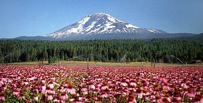 Mount Adams 2.jpg