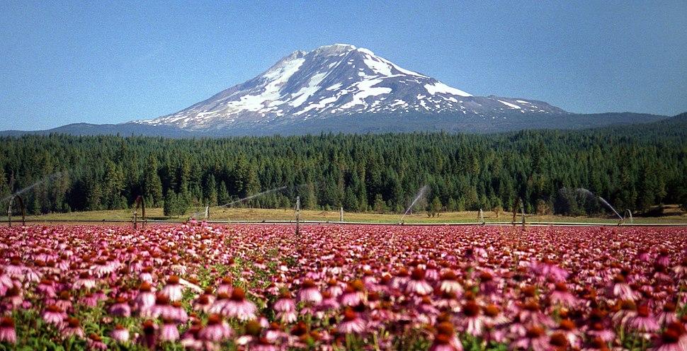 Mount Adams 2
