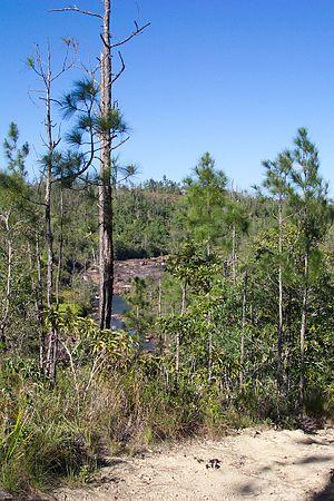 Mountain Pine Ridge Forest Reserve - Mountain Pine Ridge Forest Reserve