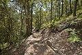 Mt Gravatt Outlook walking track (7126586857).jpg