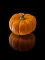 Munchkin Pumpkin.jpg