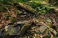 Národná prírodná rezervácia Stužica, Národný park Poloniny (21).jpg