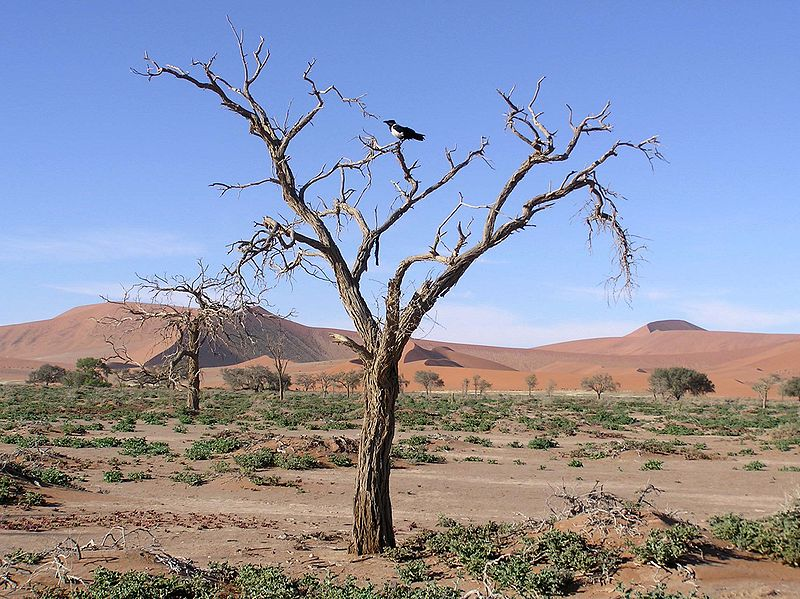 File:Namib26.JPG