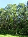 Nature in Smolensk - 68.jpg