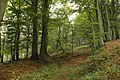 Nature reserve Vlčí důl in autumn 2014 (4).JPG