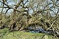 Naturschutzgebiet Haseder Busch - Am Altarm (12).jpg