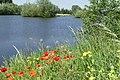 Natuur De Kroeten P1140746.jpg