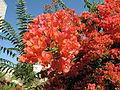 Nazareth, unidentified plants.JPG