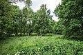 Neuenfelder Moor.jpg