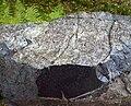 Neuschönau - Gesteins-Freigelände, Serpentinit.jpg