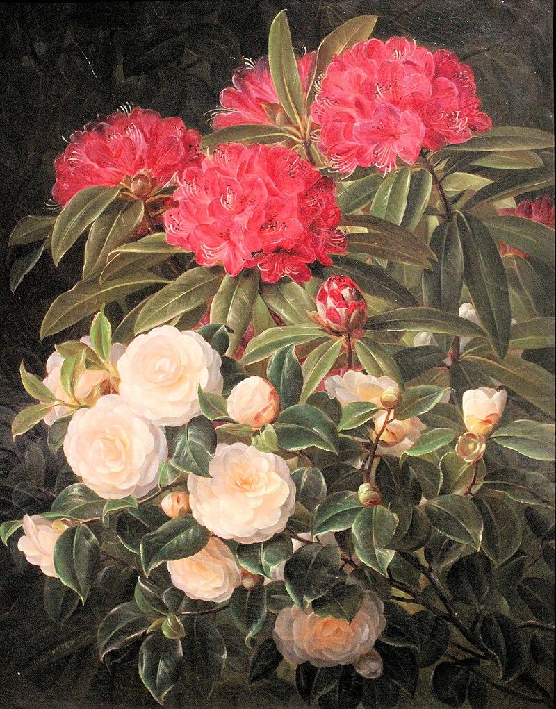 Nivaagaard Museum, Johan Laurentz Jensen, Kamelien und Rhododendron.JPG