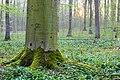 Nordkirchen, Naturschutzgebiet Ichterloh -- 2018 -- 2063.jpg