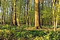 Nordkirchen, Naturschutzgebiet Ichterloh -- 2018 -- 2105.jpg