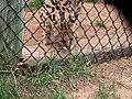Oaklawn Farm Zoo, May 16 2009 (3538915593).jpg