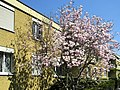 Oerlikon - Regensbergstrasse 2012-04-02 13-19-41 (P7000).jpg