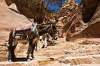On the steps to Ed Deir, Petra, Jordan, May, 2015.jpg