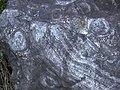 Orbicular diorite from Ainoura, Taku at History and Folklore Museum.jpg