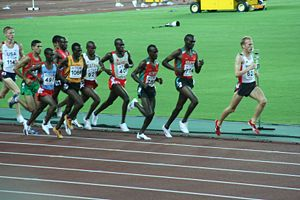 5000 metres - Runners in the 5000 metres at Osaka 2007.