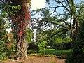 Oslo Botanical Garden - IMG 8950.jpg