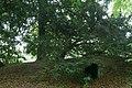Oude taxus en ingang tot de fruitkelder in het kasteelpark van Wespelaar - 369938 - onroerenderfgoed.jpg