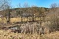 Pörtschach Winklern Brockweg Teich mit Typha latifolia 18022020 8362.jpg